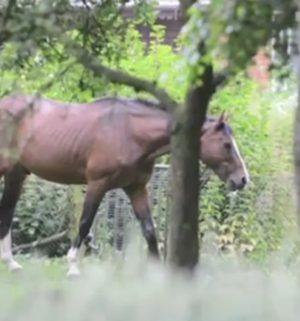 Mahnwache gegen Tierhaltung in Klein Hesepe