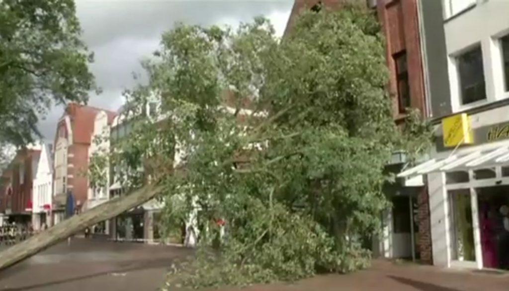 Sturm entwurzelt Bäume