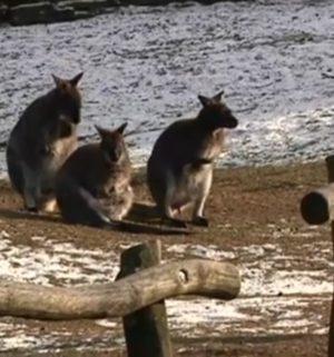 Die Kälte im Tierpark Nordhorn