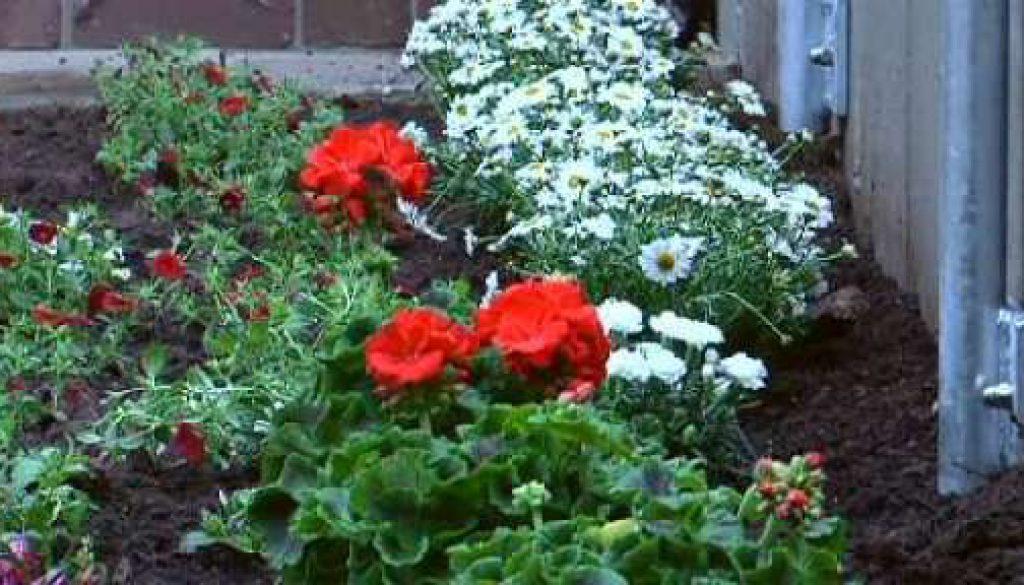 Blumen pflanzen für's Zeltlager