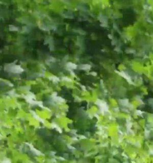 Der Gartentalk - Invasive Pflanzen