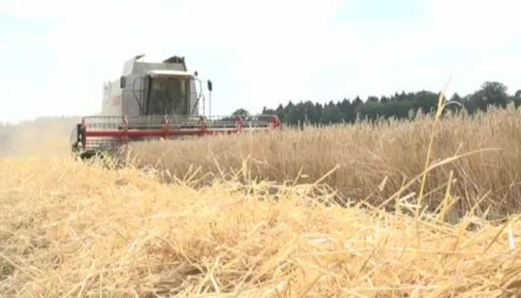 Hitzewelle überrollt die Landwirtschaft