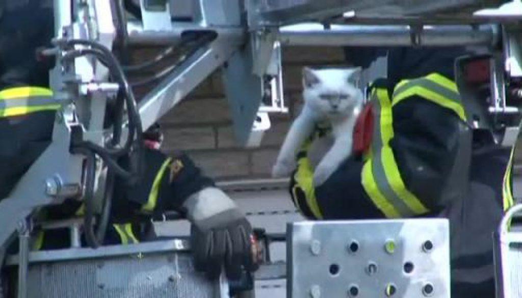 """Feuerwehr rettet Katze """"Lucy"""""""