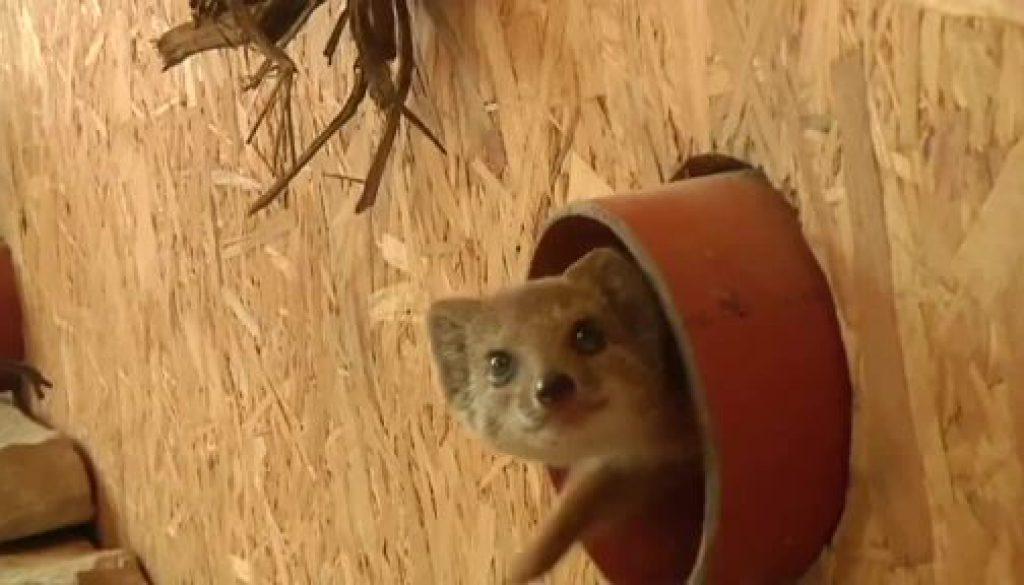 Neue Tierparkbewohner entdecken die Welt
