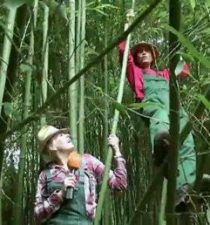 Der Gartentalk - Bambusgarten