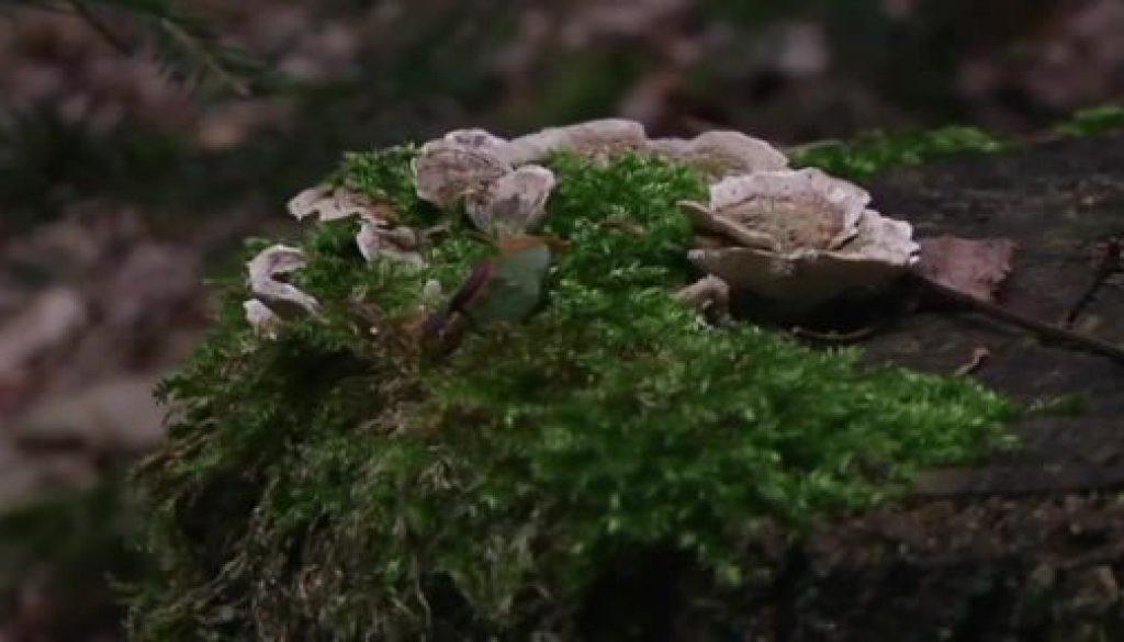 Pilze sammeln, aber richtig! - unterwegs mit einem Pilzsachverständigen