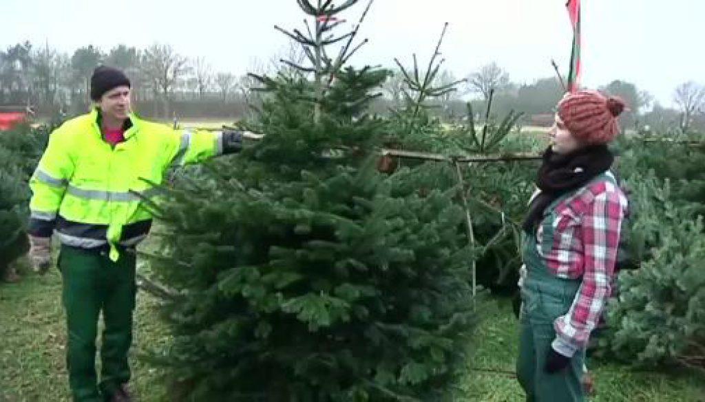 Der Gartentalk - Weihnachtsbaum-Spezial