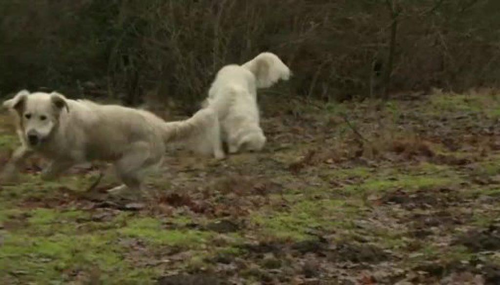 Hundehalter fordern in Nordhorn Spielplatz für ihre Vierbeiner