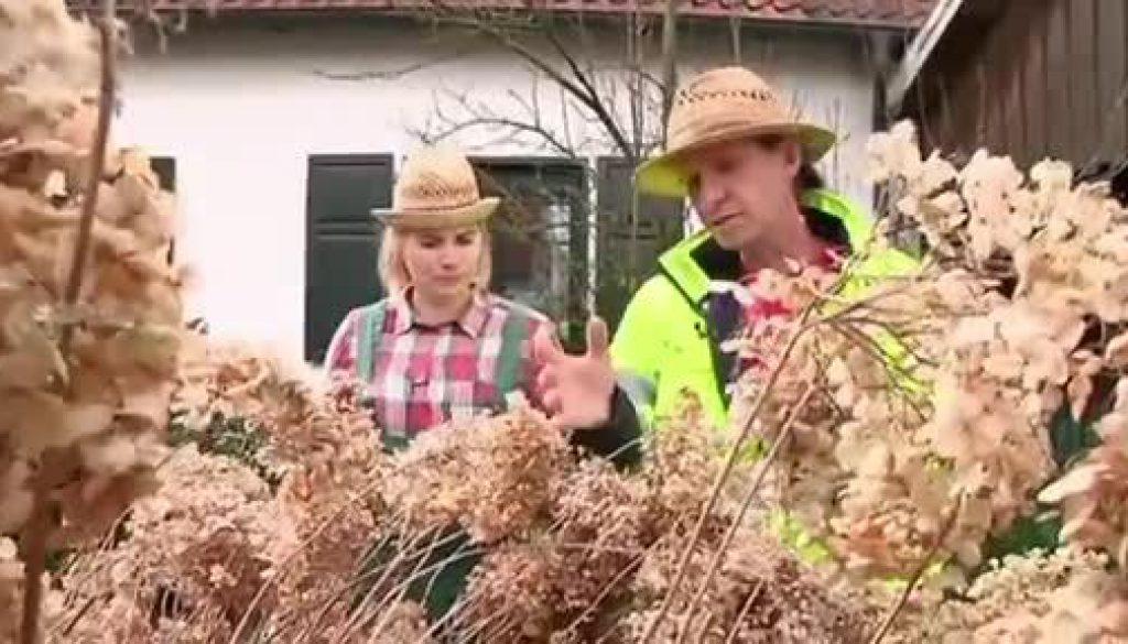 Der Gartentalk - Kranke Bäume und Hortensien zurückschneiden