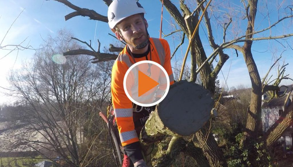 Screen_Gartentalk Baumpflege