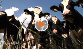 screen_Landwirtschaftsforum