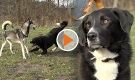 screen_VHS Kurs Hund