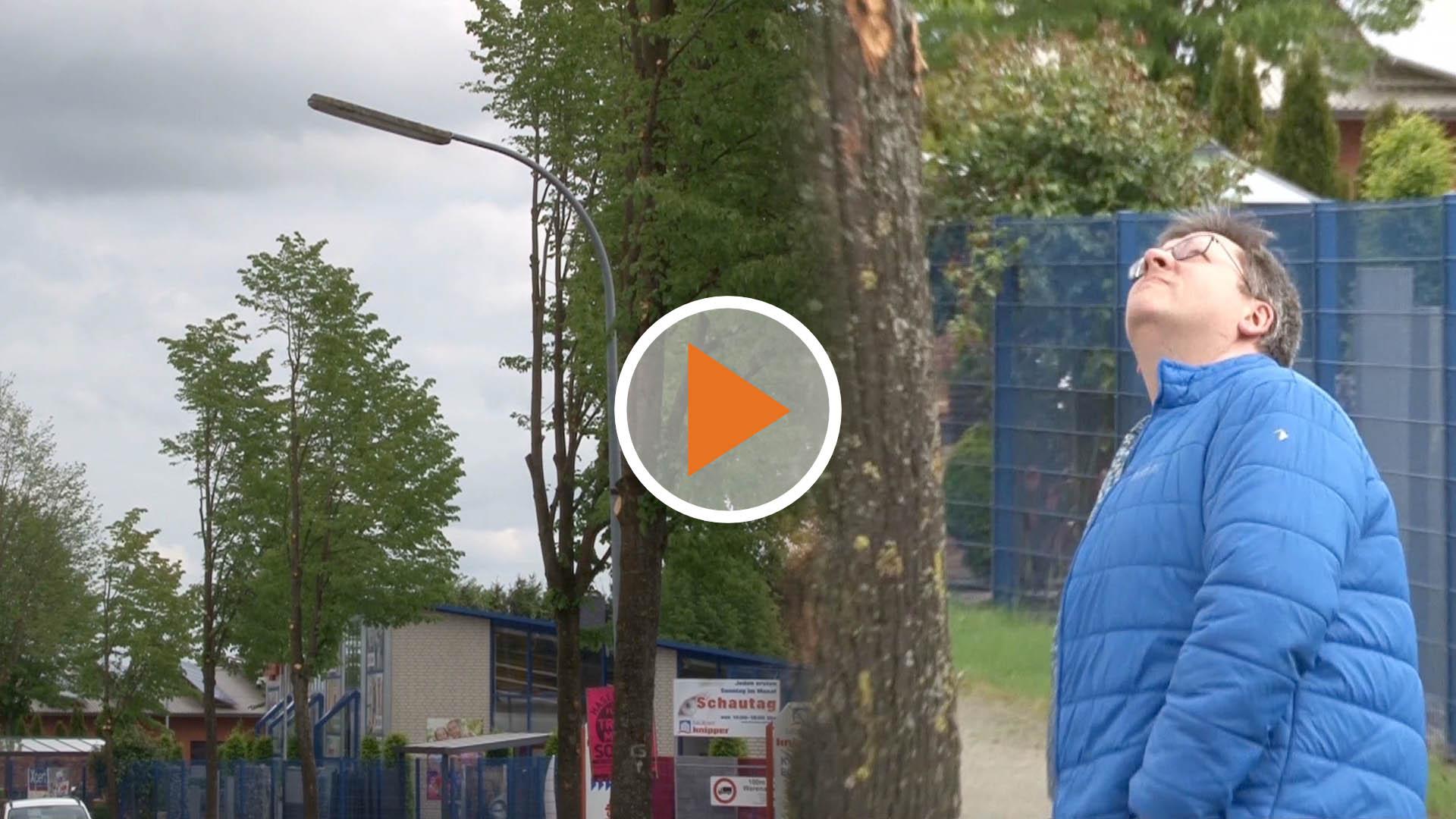 Screen_Baeumebeschnitten
