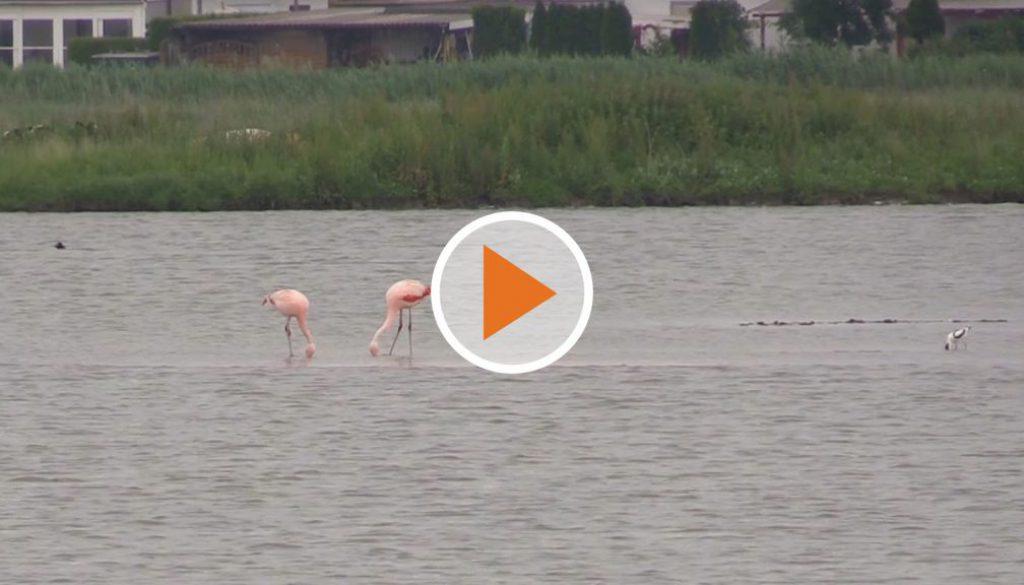 Screen_Flamingo
