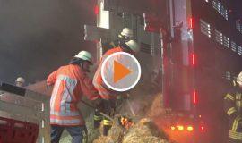 Screen_Tiertransporter faengt Feuer