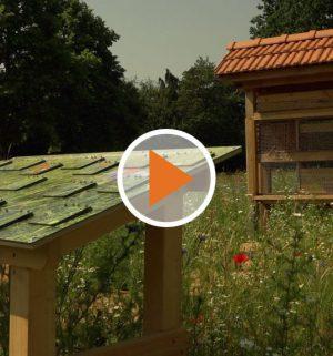 Screen_wildblumenwiese_papenburg