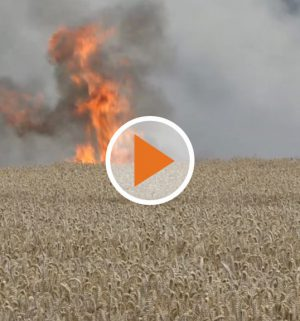 Screen_Getreidefeld steht in Flammen