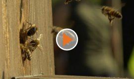 Screen_Kinder entdecken Bienen