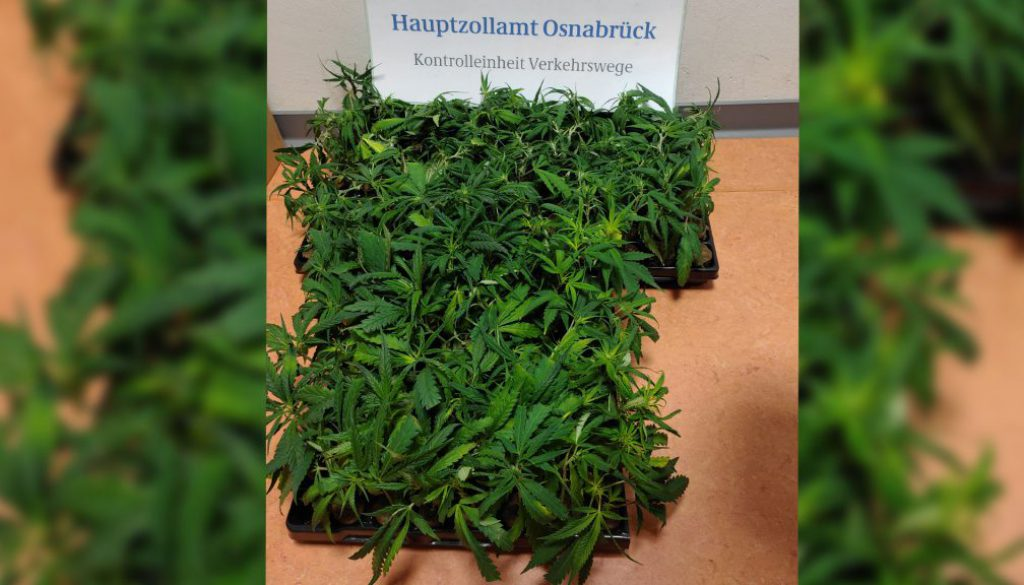 screen_cannabisfund