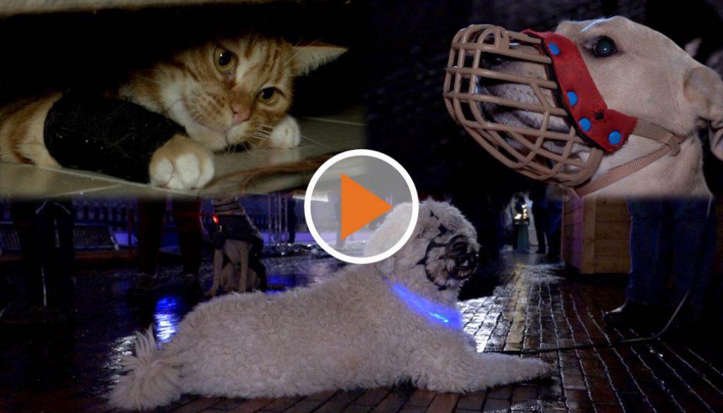 Screen_Die Tierzeit Dezember 2019