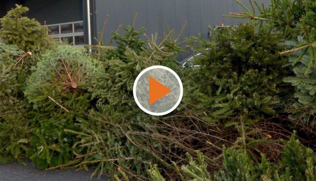 Screen_weihnachtsbaeume-abhol-aktion-darme