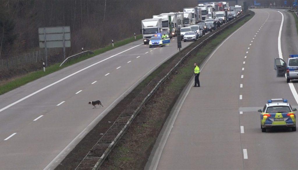 Screen_Hund auf der Autobahn