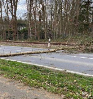 Baum umgestürzt Sturm Sabine