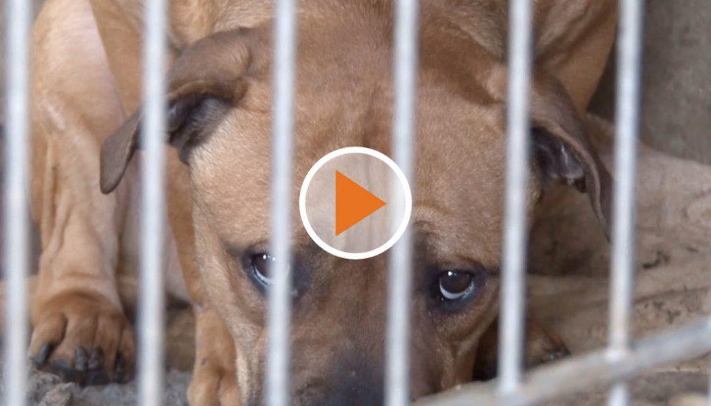 Screen_Jahrelange Tierquälerei auf emsländischen Hof