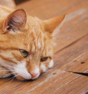 20 06 07 Das Katzen-Problem THUMBNAIL