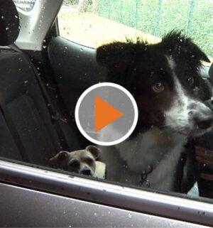 Screen_20 07 02 Die Gefahren seinen Hund im Auto zu lassen