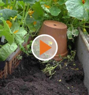 Screen_20 07 07 Ein Topf gegen Ameisen