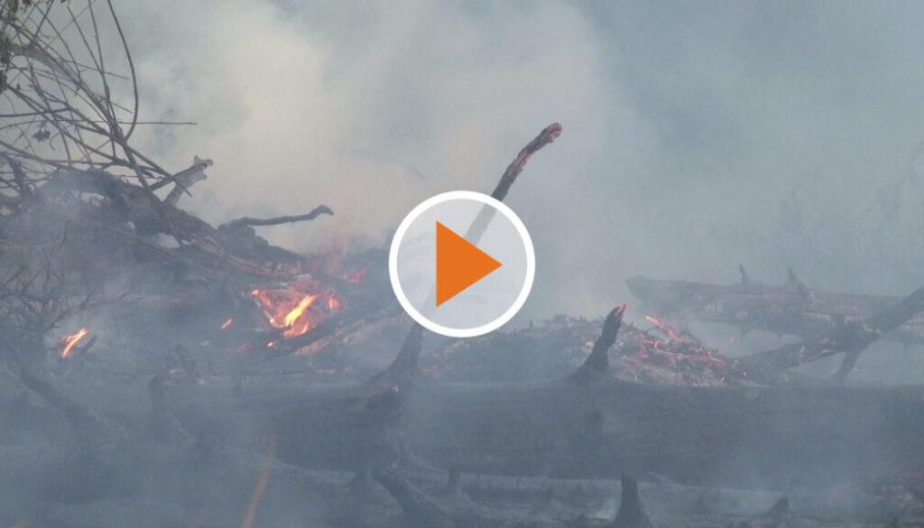 screen_60 Einsatzkraefte bei Waldbrand - Brandstiftung nicht ausgeschlossen