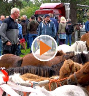Screen_Pferdemarkt Rhede