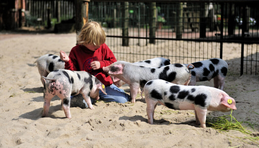 Screen_Zoos-starten-Projekt-zugunsten-bedrohter-Tiere