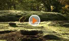 Screen_Tierpark Nordhorn