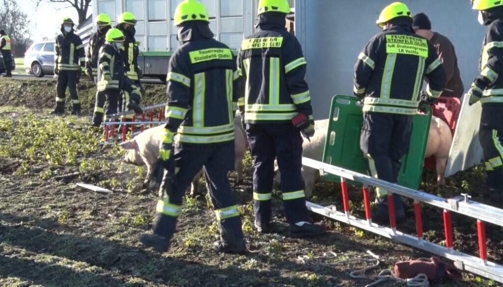screen_Feuerwehr kuemmert sich um 160 Schweine