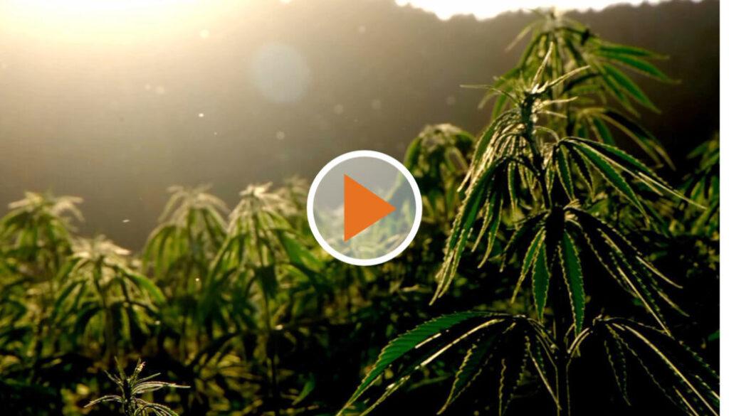 Screen_cannabis legalisieren fragezeichen