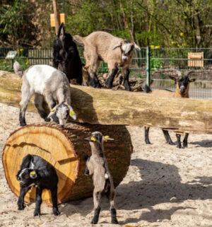 screen_Gute Nachrichten aus dem Tierpark Nordhorn
