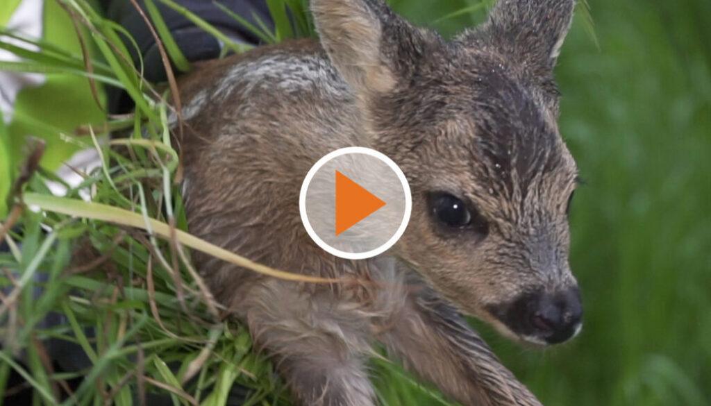 Screen_Tierrettung erhaelt neue Drohnen